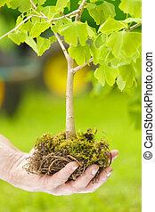 fundo, árvore, mão, verde, segurando, pequeno, macho, raizes