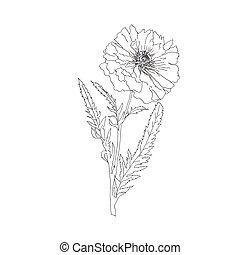 single terry poppy isolated on white