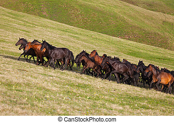 Herd of horses on a summer pasture Caucasus,...