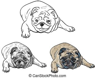 Drawing pug on white background