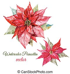 Poinsettia flower - Beautiful vector image with nice...