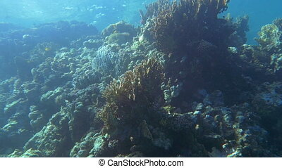 Coral Reef near the Water Surface