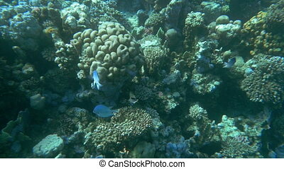 Coral Reef and Its Habitants - Slow motion shot of a coral...