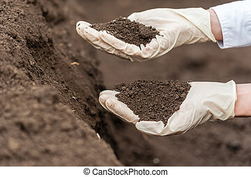 Researcher technician holding soil - Close-up of a young...