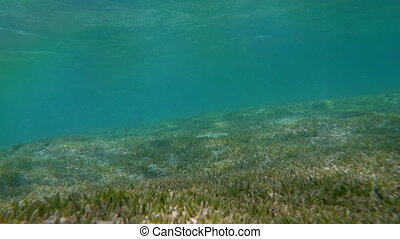 Sea Bottom with Water Grass - Slow motion shot of a sea...