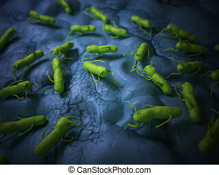 The salmonella - medical bacteria illustration of the...