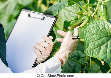 Examining plant leafs for disease! - Biotechnology woman...