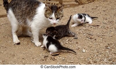 Three small cats with their mother