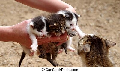 Three small cats in the hands of women