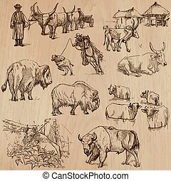 Cows and Cattle - Hand drawn vector pack - Animals around...