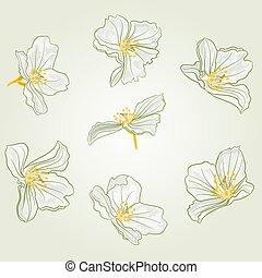 Jasmine flowers vector.eps - Jasmine flowers isolated on a...
