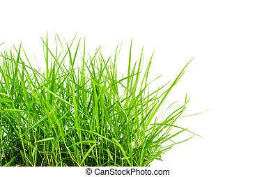 fresh green grass lawn isolated