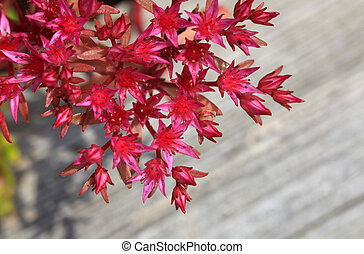 Red small flowering bush on wood board