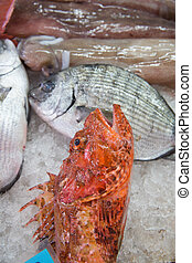 Fish market - Some fishes exposed at the fish market