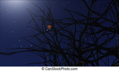 night stars 9 - stars twinkle in the night sky,leaf fall...