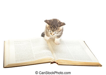 thirst for knowledge - small kitten inspecting large foreign...