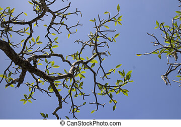 Tree branches and sky background