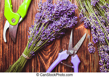 Lavender cutting - cutters and fresh flowers on wooden table