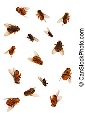 Dead Flies isolated ovr white background