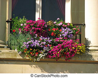 Window, flowers, colored