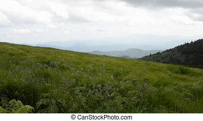 Grasses Blow in the Mountains - Wild grasses blow in the...