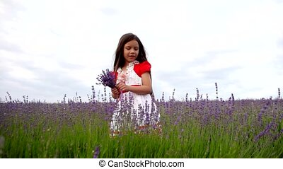Little Girl Collects a Bunch of Lavender Flowers.