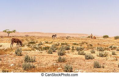 Desert landscape in Israel's Negev desert - Desert...