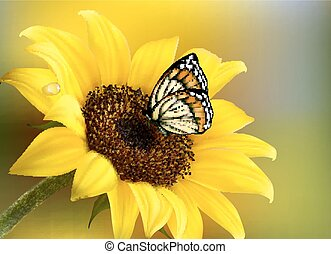 Yellow sunflower with a butterfly. Vector.