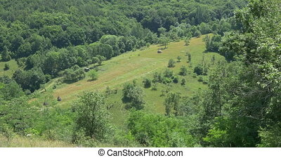 Forests and Grasslands in Summer - Beautiful relaxing view...