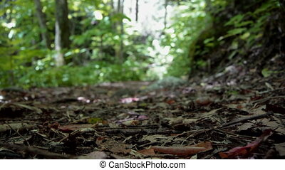 Hiker Passing by footsteps - A female hiker walks along a...