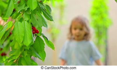 Cute Little Boy Eating Cherries In The Garden