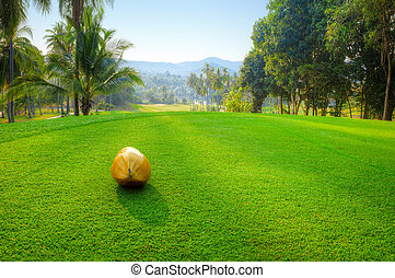 Coconut on golf course - Coconut on green terrace. Golf...