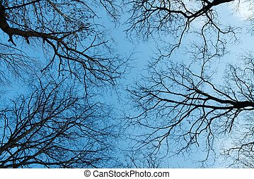 Treetops - Bare leafless treetops against clear blue sky