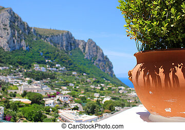 Capri - Potted plant on the cliff overlooking the town of...