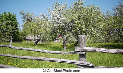 Rural landscape - Slider shot of blooming apple garden, blue...