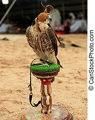Falcon at an Arabian camp - A falcon sits on its stand at a...
