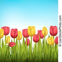 Green grass lawn with tulips on sky. Floral nature flower background