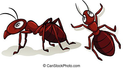 Simple red ants on white illustration