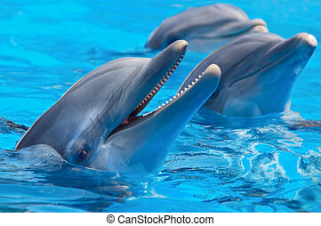 happy dolphins in the blue water of the swimming pool