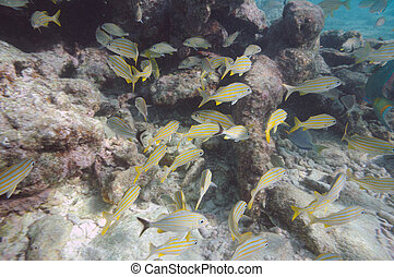 Underwater picture of tropical fishes Key West, Florida