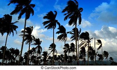 Coconut Blue sky cloud