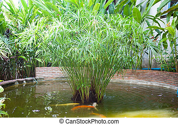 fish pond - Fish pond. Tree planted in the middle of the...