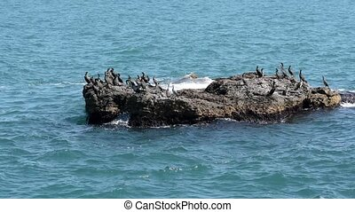 Cormorants on the island in the sea in the summer