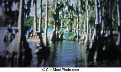 FT. LAUDERDALE, USA - 1957: Banyan trees - Unique vintage...