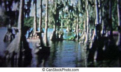 FT. LAUDERDALE, USA - 1957: Banyan trees - Unique vintage...