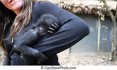 Baby Spider Monkey - Woman holding a baby spider monkey