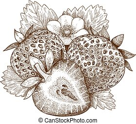 engraving strawberry  illustration