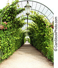 Vine arbor tunnel in garden Rundale Latvia