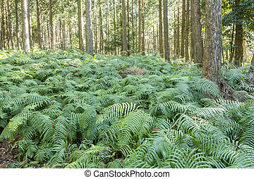 Fern covering ground - Green fern covering ground under the...