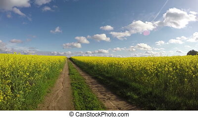 blossoming rapeseed field panorama - farmland rural road and...